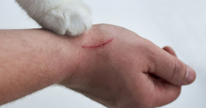 Kode Alam Dicakar Kucing
